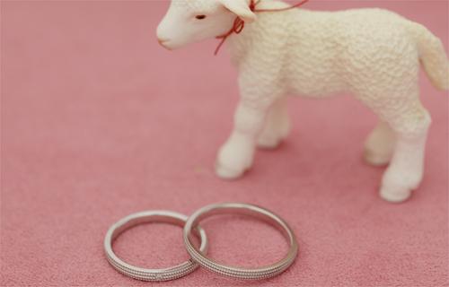 羊さんよろしくね